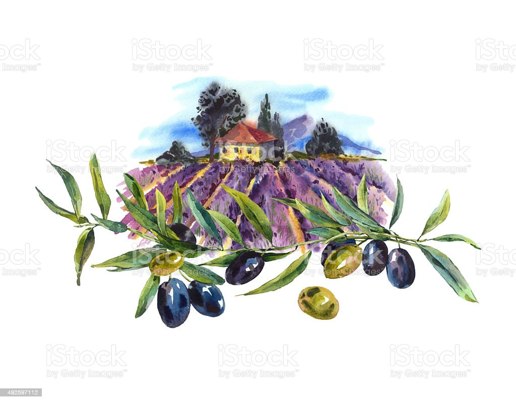 Watercolor greeting card with avender and olives vector art illustration