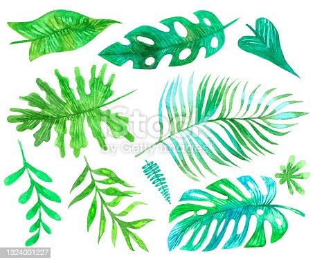 istock Watercolor group big green leaves exotic palm tree on white background. Tropical plant foliage set with visible texture isolated on white. 1324001227