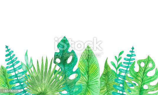 istock Watercolor group big green leaves exotic palm tree on white background. Tropical plant foliage with visible texture. 1324001229