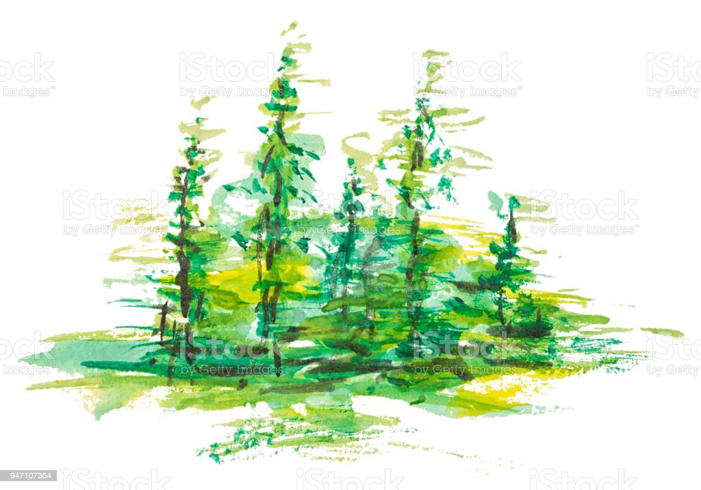 Watercolor group of fir trees green forest landscape, Drawing on white isolated background. vector art illustration
