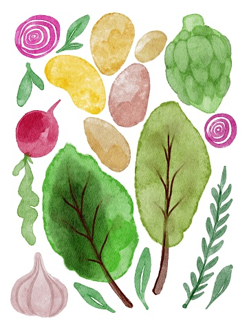 Watercolor hand drawing set of vegetables. Potatoes, onions, garlic, lettuce, cabbage, radish, greens. Use for banner, invitation, harvest festival card, banner, gardening day template, farmer shop