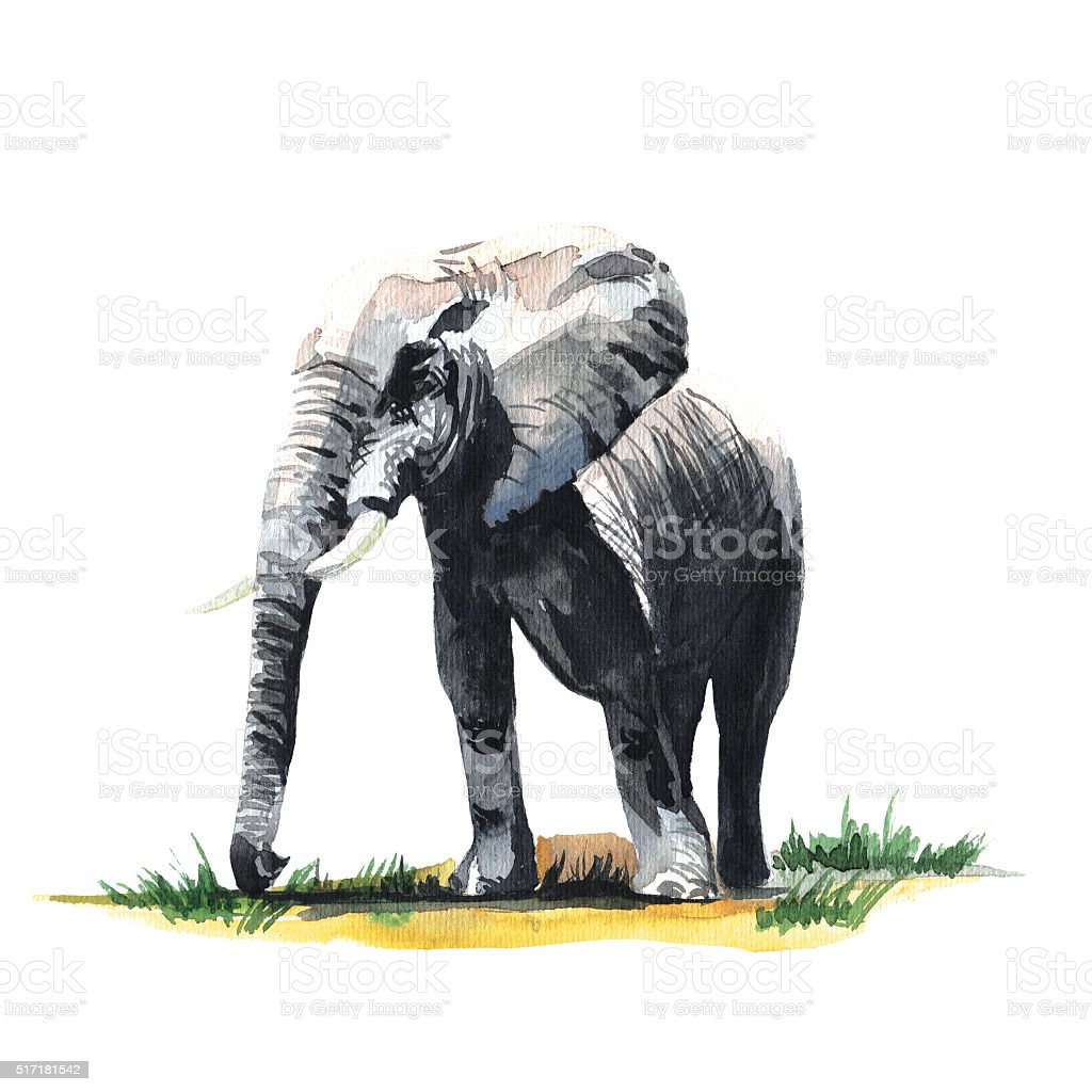 Watercolor hand drawn African elephant. vector art illustration
