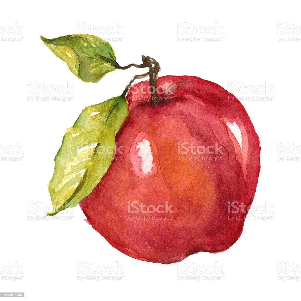 Watercolor hand drawn apple vector art illustration