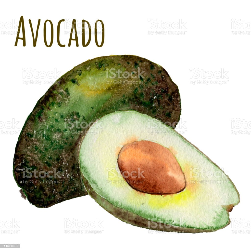 Watercolor hand drawn avocado vector art illustration