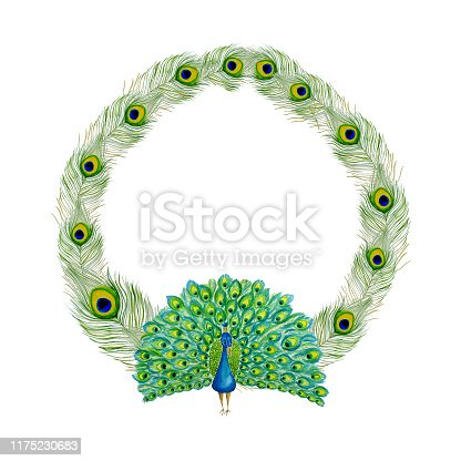 istock Watercolor hand drawn Peacock and peacock feathers round frame 1175230683