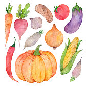 istock Watercolor hand painted collection of vegetables. Fresh food illustrations isolated on white background. 1301055768