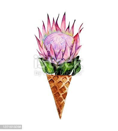 Watercolor hand painted composition consisting of protea flower in a waffle cone.