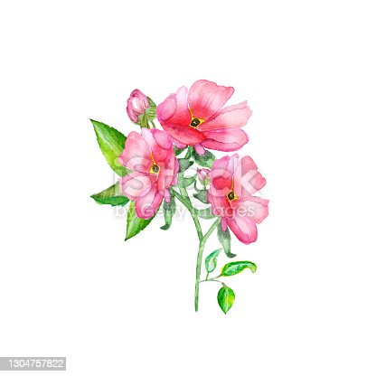 istock Watercolor hand painted illustration. Red roses branch isolated on white background 1304757822