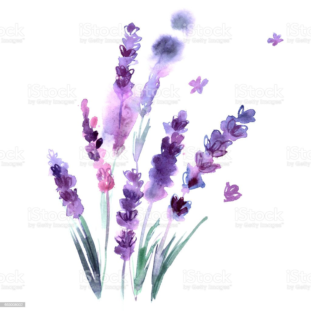 Watercolor Hand Painted Lavender Flowers On White