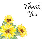 istock Watercolor hand painted nature garden floral composition with three yellow and black seeds sunflowers, green leaves bouquet and thank you text on the white background for greeting cards 1267368372