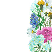 Watercolor hand painted nature herbal floral composition bouquet banner with white chamomile, pink belladonna, blue yarrow, yellow dandelion on the white background for invite card
