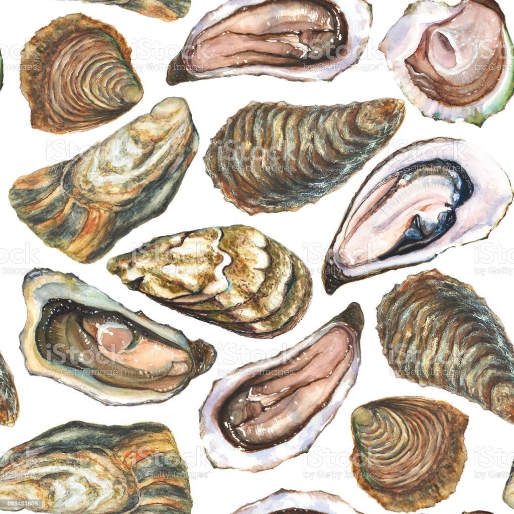 Watercolor hand painted oysters seamless pattern on white background vector art illustration