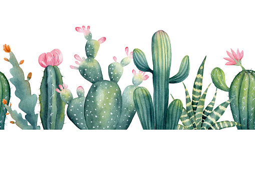 Watercolor hand painted seamless border of cactus with pink flower. Clipart illustration of houseplant succulent for design background, web template, digital paper, home decor, botanical print.