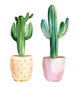 Watercolor hand painted set of 2 cactuses in pink and yellow flower pots. Isolated elements on white background.
