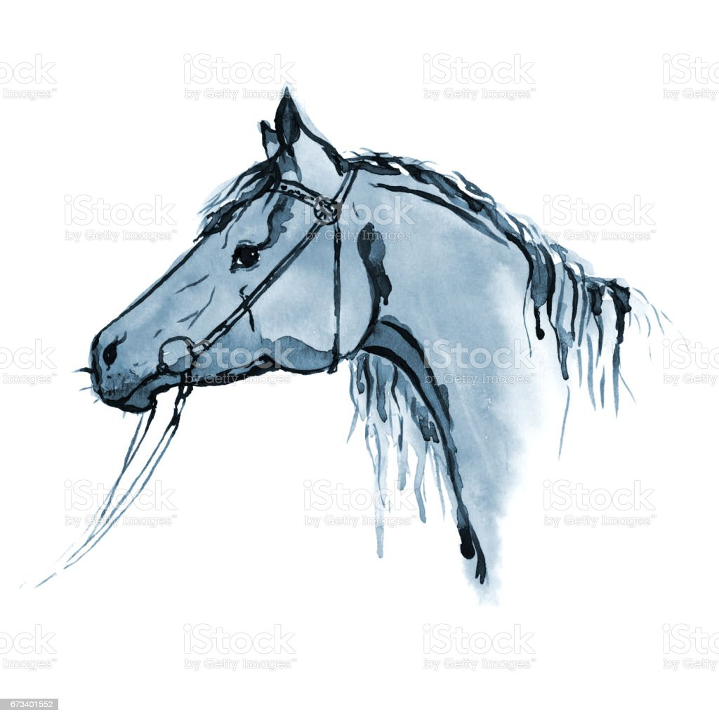 Watercolor Hand Painting Horse Head In Bridle On White Stock Illustration Download Image Now Istock