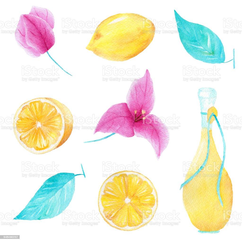 Limon, zeytin yağı, yaprak ve bouganvillea çiçek suluboya el yapımı dizi. Baskı ve dekorasyon için kullanılabilir. vektör sanat illüstrasyonu