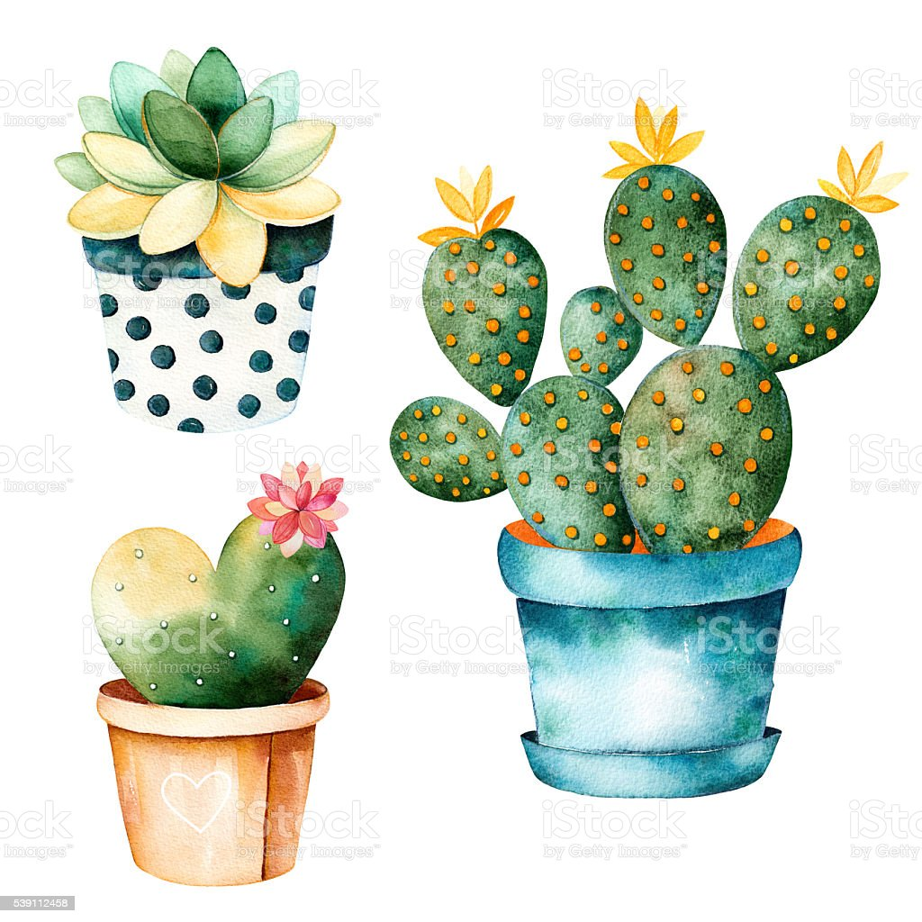 Watercolor Handpainted Cactus Plant And Succulent Plant In Pot Stock ...