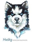 Watercolor Husky on the white background. Home animal. Dog art illustration. Can be printed on T-shirts, bags, posters, invitations, cards, phone cases, pillows