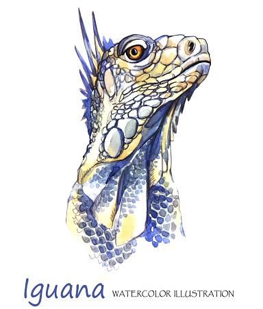 Watercolor Iguana on the white background. Exotic animal