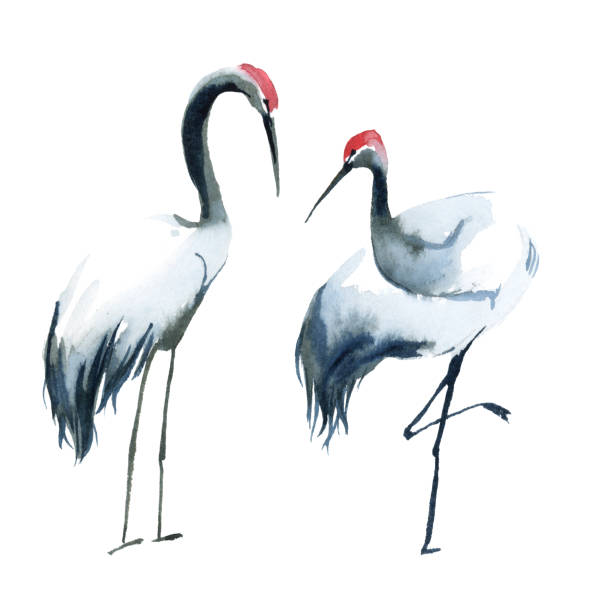 watercolor illustration. black and white two shadoofs  isolated on white background - crane bird stock illustrations