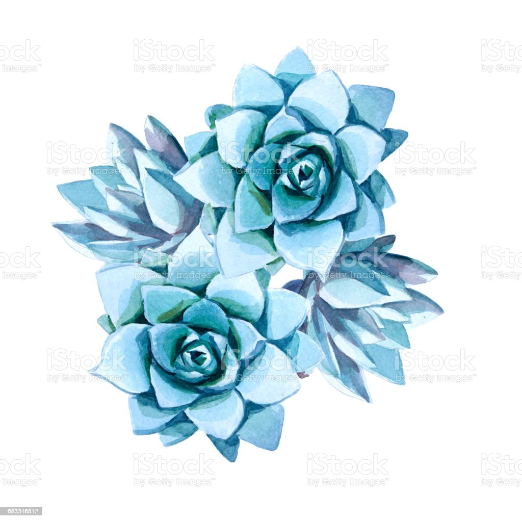 Watercolor Illustration Blue Succulent Stock Illustration Download Image Now Istock