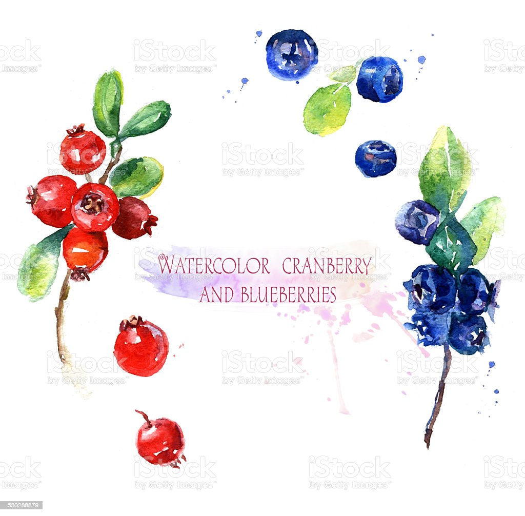 Watercolor illustration, cranberry  and blueberries vector art illustration
