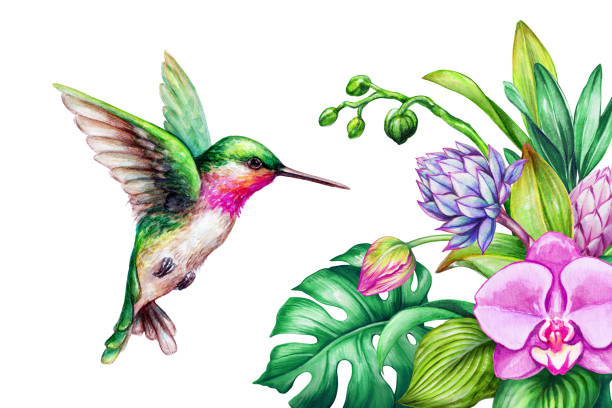 watercolor illustration, exotic nature, flying humming bird, tropical calla lily flowers, green jungle leaves, isolated on white background - hummingbird stock illustrations