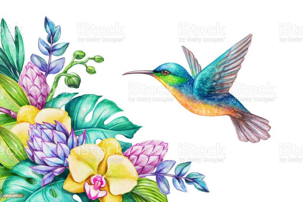 Ilustración de Ilustración Acuarela Naturaleza Exótica Vuelo De ...