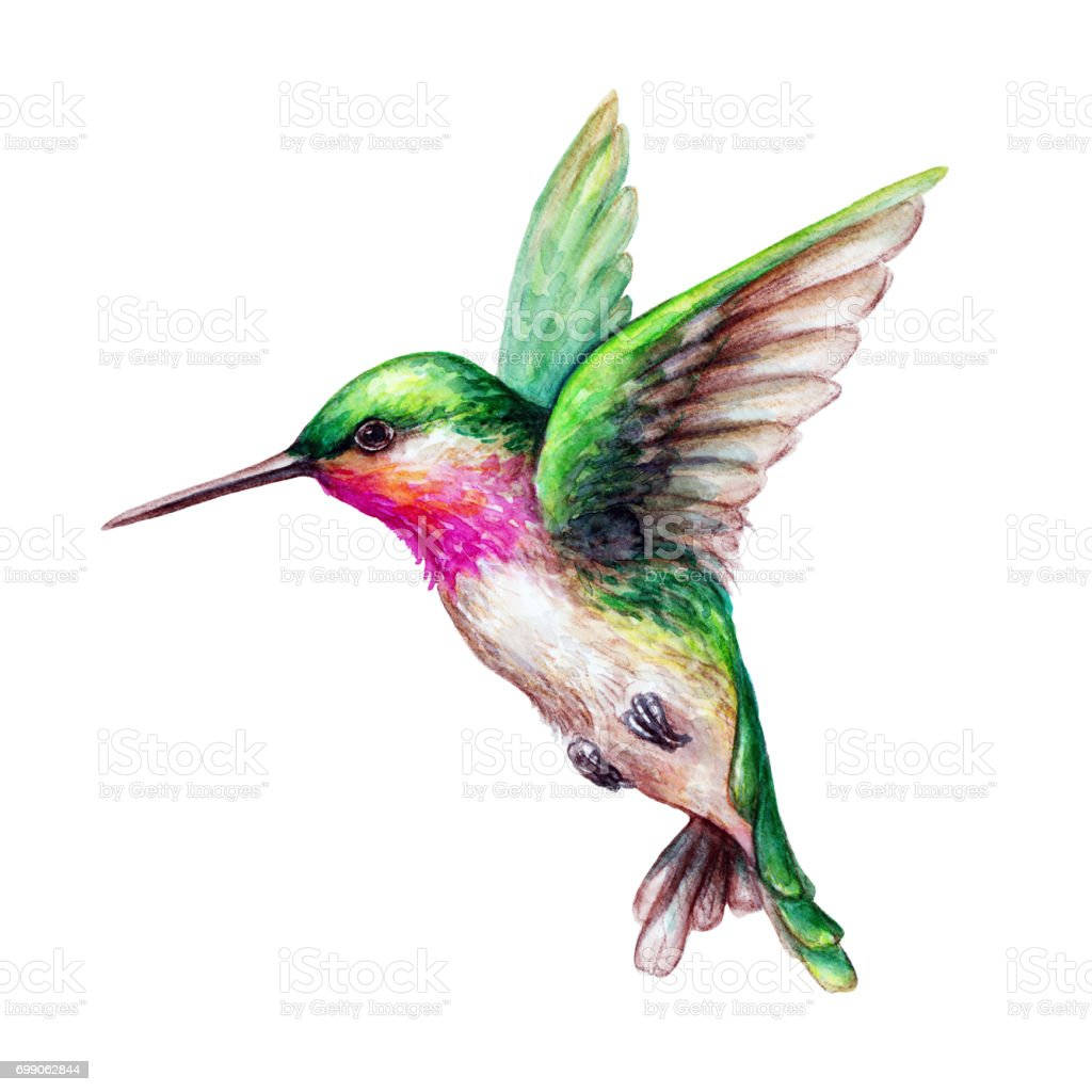 watercolor illustration flying hummingbird isolated on hummingbird clip art free hummingbird clipart black and white free