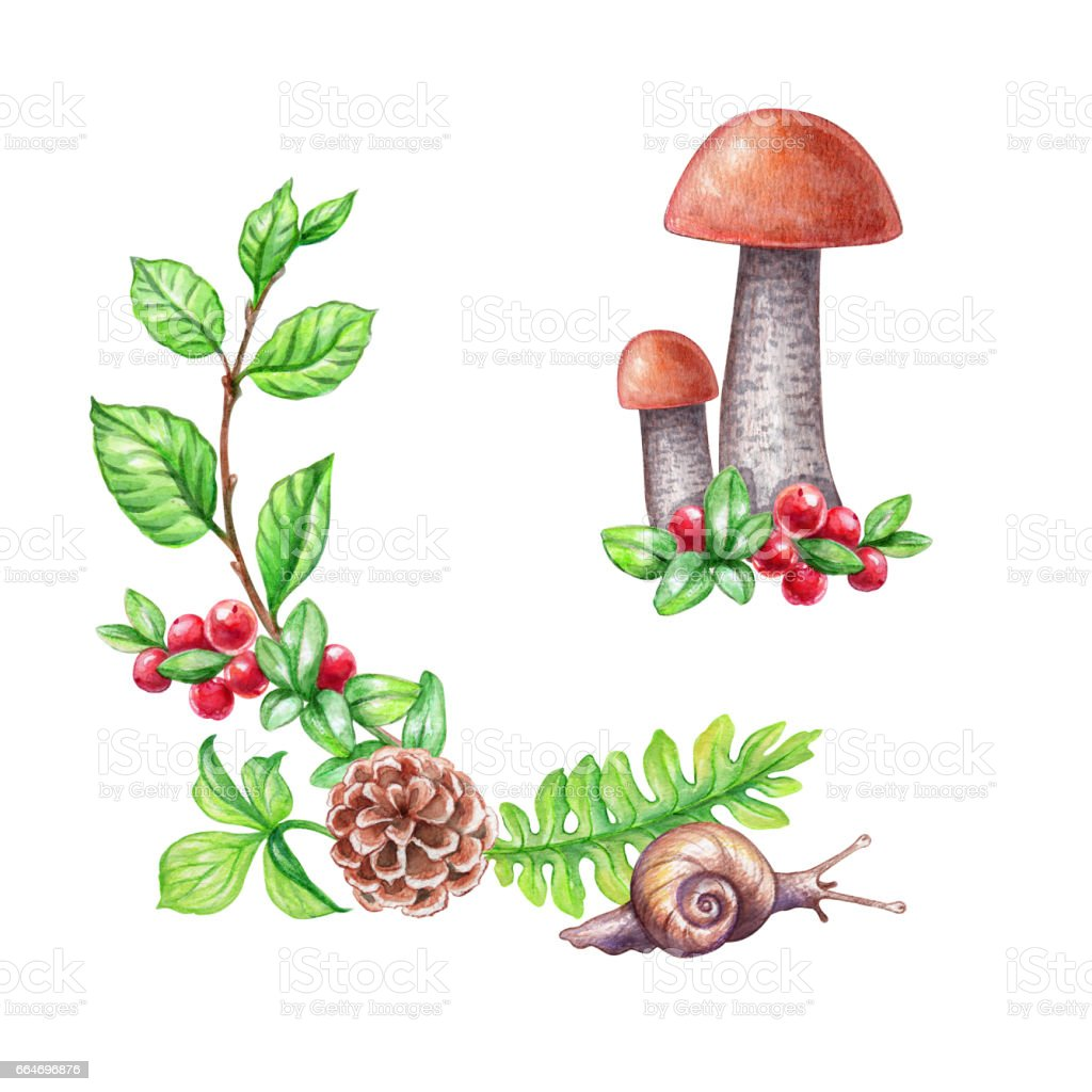 watercolor illustration, forest elements, mushrooms, fern, leaves, cowberry, berries, isolated on white background vector art illustration