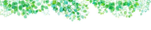 illustrazioni stock, clip art, cartoni animati e icone di tendenza di watercolor illustration frame of fresh green leaves transparent to sunlight, banner - forest bathing