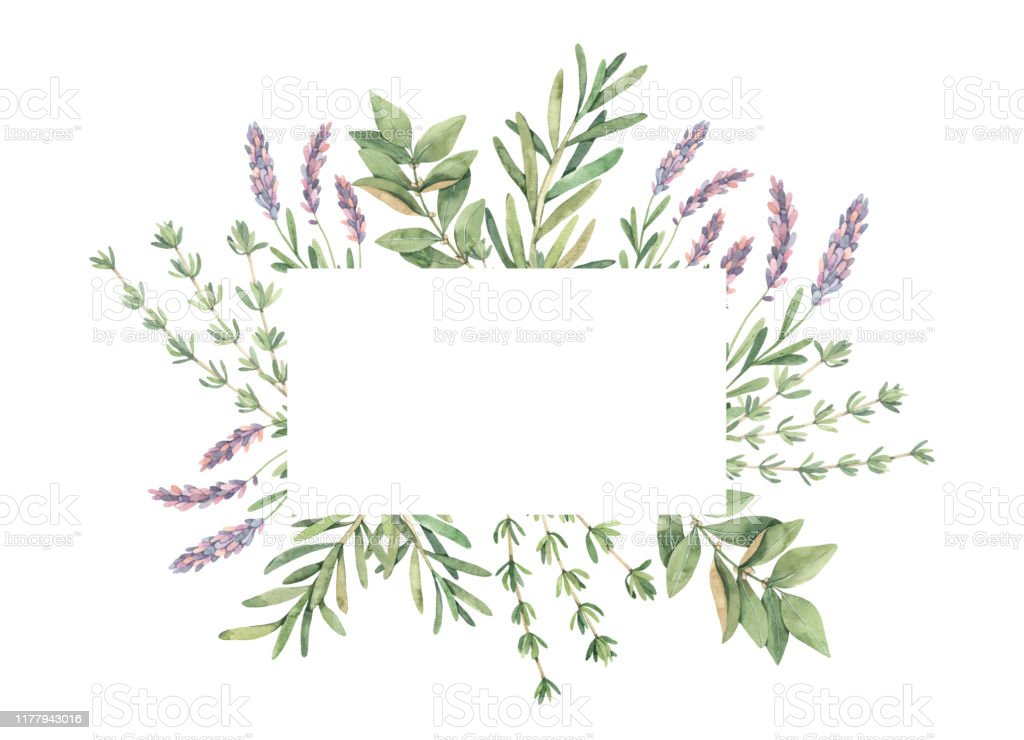 Watercolor illustration. Label with botanical green leaves, herbs and branches. Floral Design elements. Perfect for wedding invitations, greeting cards, blogs, prints, postcards Watercolor illustration. Label with botanical green leaves, herbs and branches. Floral Design elements. Perfect for wedding invitations, greeting cards, blogs, prints, postcards Aromatherapy stock illustration