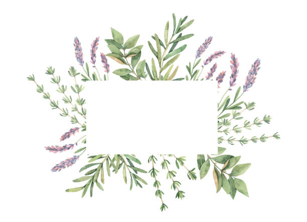 Watercolor illustration. Label with botanical green leaves, herbs and branches. Floral Design elements. Perfect for wedding invitations, greeting cards, blogs, prints, postcards Watercolor illustration. Label with botanical green leaves, herbs and branches. Floral Design elements. Perfect for wedding invitations, greeting cards, blogs, prints, postcards thyme stock illustrations