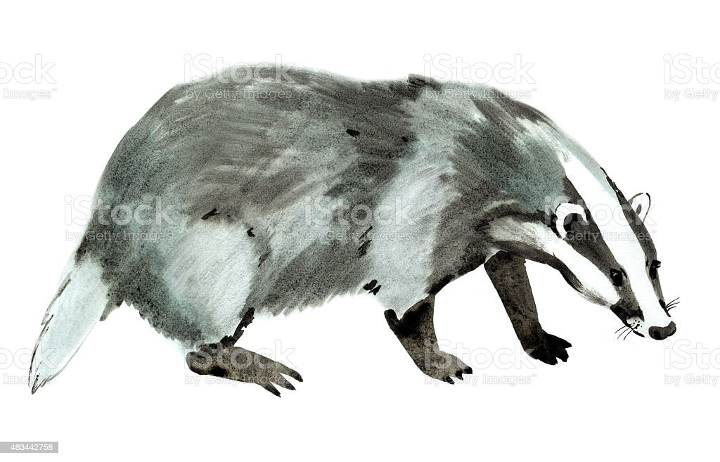 Watercolor illustration of a badger in white background. vector art illustration