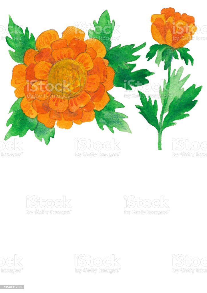 花の水彩画イラストは、大きなオレンジ色の花と葉します。 - イラストレーションのロイヤリティフリーストックイラストレーション