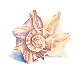 istock Watercolor Illustration of a Seashell 1214757736