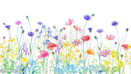 istock A watercolor illustration of a spring field where various flowers are in full bloom. Horizontal seamless pattern. 1299895725