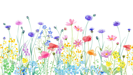 A watercolor illustration of a spring field where various flowers are in full bloom. Horizontal seamless pattern.