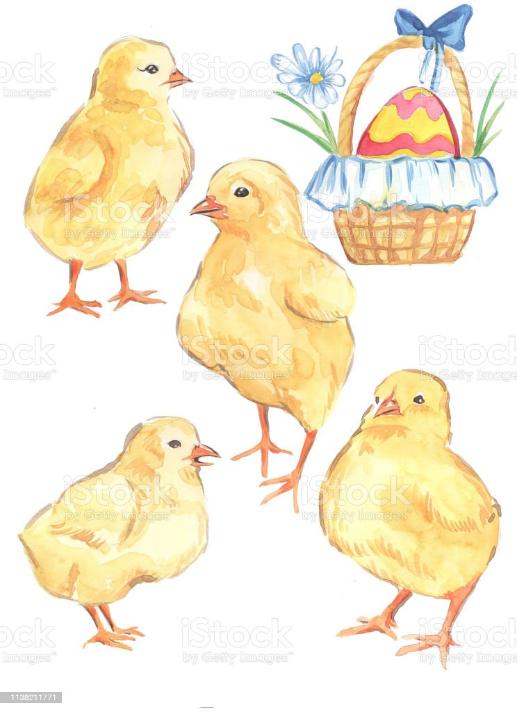 watercolor illustration of chickens yellow Easter holiday Easter egg...
