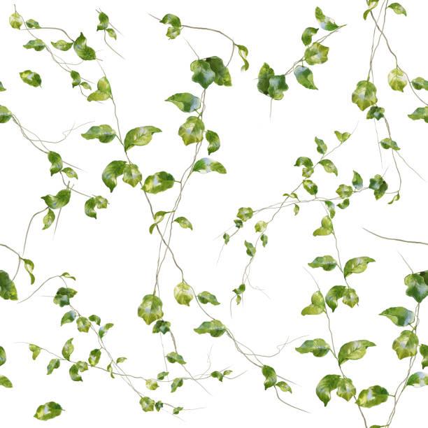stockillustraties, clipart, cartoons en iconen met aquarel illustratie van blad, naadloze patroon op witte achtergrond - klimop