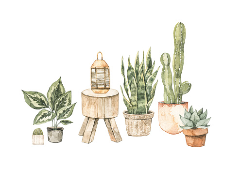Watercolor illustration of modern interior with home plants on pots and wooden table. Tropical vibe. Cactus, succulent Home decor pre-made composition. Perfect for posters, prints, magazine, cards