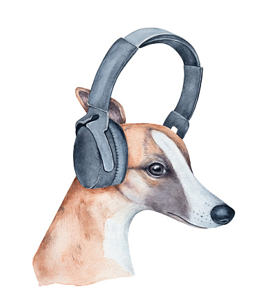 Watercolor illustration of pretty smiling whippet dog wearing black headphones for music. Symbol of happiness, freedom, peace, relax, culture, unity, emotional life. Hand painted watercolour drawing.