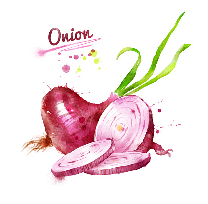 Watercolor Illustration Of Red Onion Stock Illustration ...