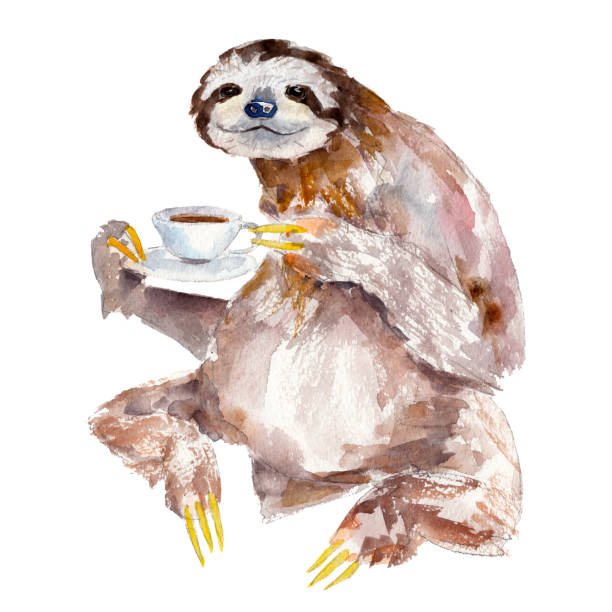 Watercolor illustration of sloth with cup of coffee vector art illustration