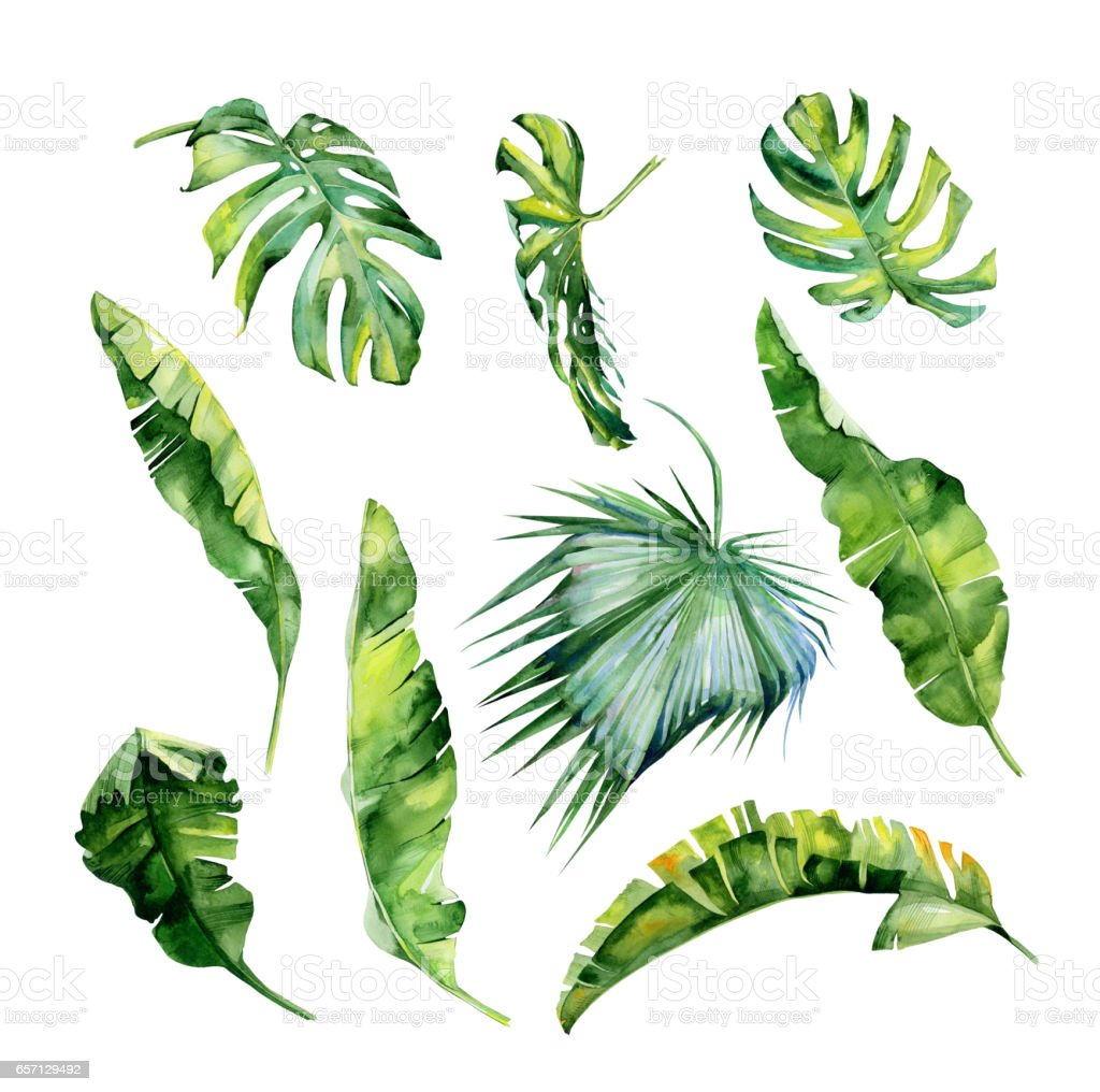 Watercolor illustration of tropical leaves, dense jungle. Hand painted. vector art illustration