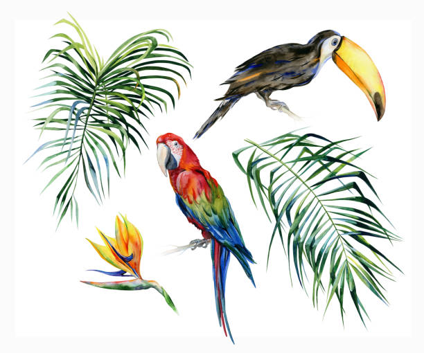 watercolor illustration of tropical leaves, dense jungle. toucan bird and scarlet macaw parrot.strelitzia reginae flower. - exotic animals stock illustrations