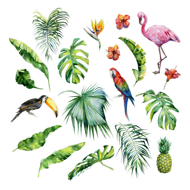 Watercolor illustration of tropical leaves,flamingo bird and pineapple. Toucan and scarlet macaw parrot.Strelitzia reginae flower. Hand painted. Banner with tropic summertime motif. Palm leaves. bird of paradise plant stock illustrations