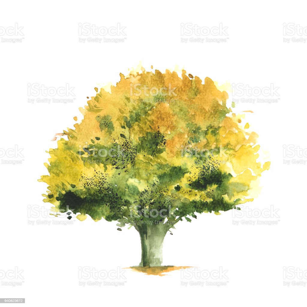 Watercolor Illustration Of Yellow And Green Tree Stock Vector Art ...