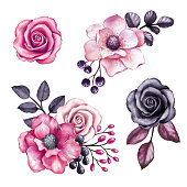 watercolor illustration, pink flowers and black leaves design elements, floral decoration, isolated on white background