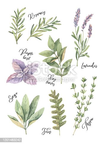 Watercolor illustration. Poster with botanical green leaves, herbs and branches. Floral Design elements. Perfect for wedding invitations, greeting cards, blogs, prints, postcards